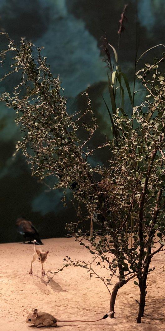 صورة عن قرب لإحدى النباتات القطرية الأصلية المعروضة في متحف قطر الوطني.
