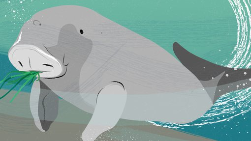 An illustration showing a dugong's black eyes and small ears