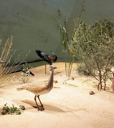 A photograph of a female visitor to NMoQ taking a picture of the wildlife exhibits