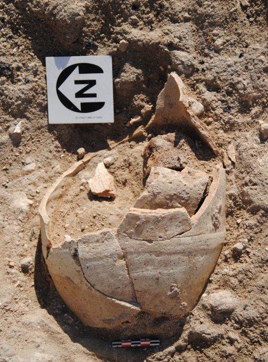 Excavation found fossils in the desert