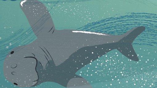 An illustration showing a dugong swimming using its two flippers and tail