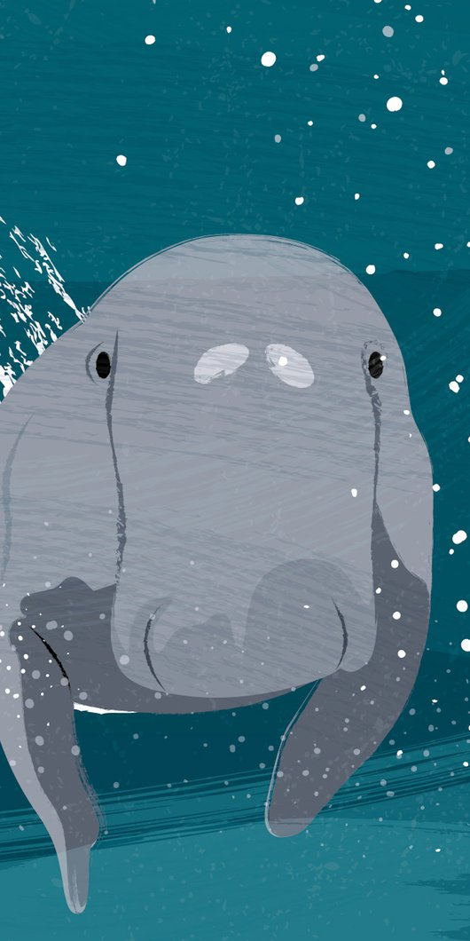 An Illustration showing a dugong's face