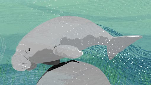An Illustration showing a dugong's large flat tail