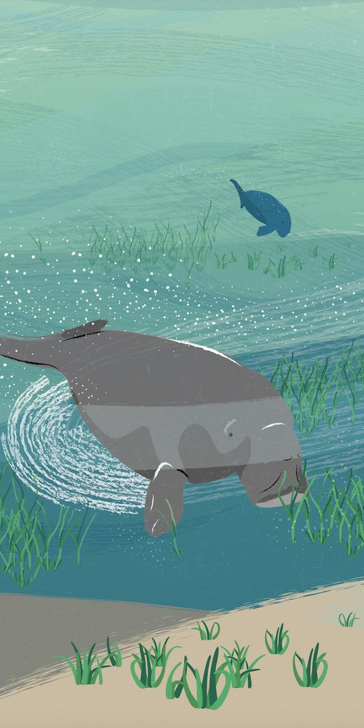 An illustration showing a group of dugongs swimming under the sea