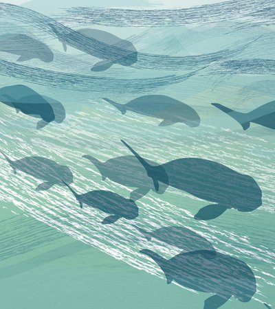An illustrated group of dugongs swimming including mothers with calves