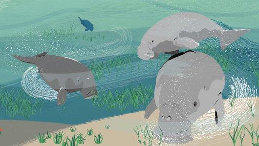 Sirenia: A Little Dugong's Tale