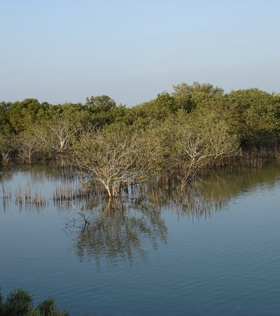 A close-up of the mangroves at Jazirat bin Ghannam island