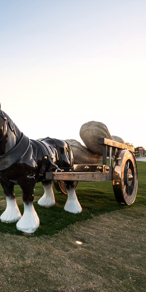 A wide-angle view of Perceval, the lifesize bronze sculpture of a shire horse with a cart containing giant marrows